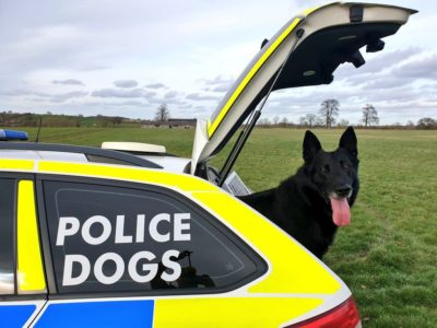 Police Dog Buzz ready for action