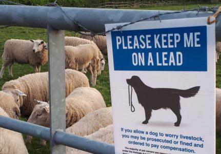 Please keep me on a lead sign for dogs near sheep farm